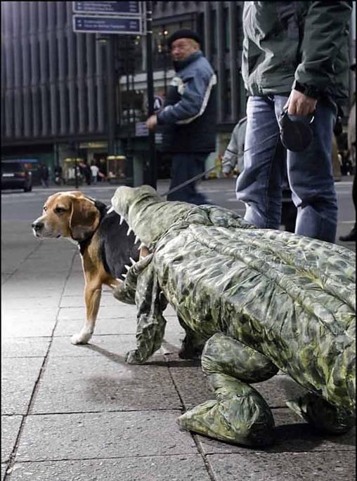Croc-eat-dog
