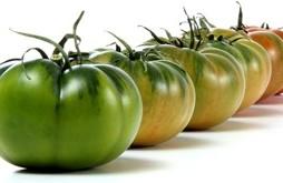 tomates-raf