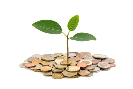 plant-growing-over-coins