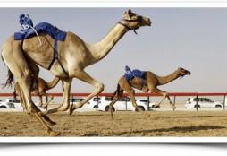 camel-race-in-dubai