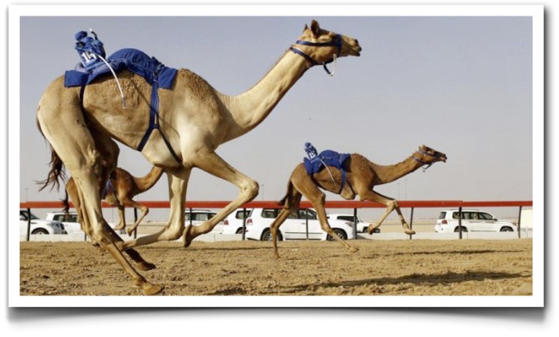Casos interesantes en robotización: las carreras de camellos ...