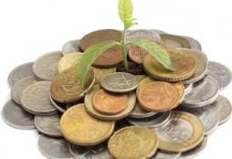 Dinero y arbolito