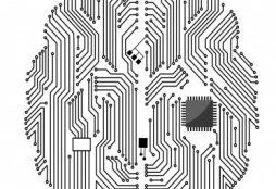 Innovator's brain