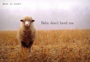 Baby don't herd me
