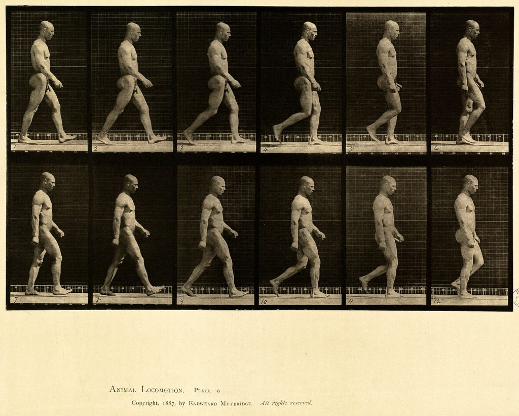 Human locomotion (Public Domain)